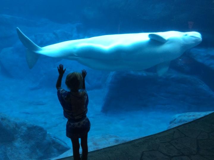 'Georgia Aquarium'