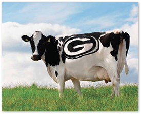 packer-cow
